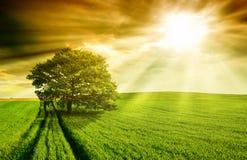 Einsamer Baum Stockfotos