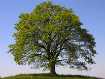 einsamer Baum stockfotografie