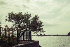 Einsamer Baum Stockfoto