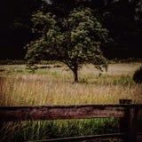 Einsamer Baum Stockbilder