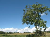 Einsamer Baum Lizenzfreies Stockfoto