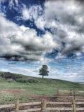 Einsamer Baum Lizenzfreies Stockbild