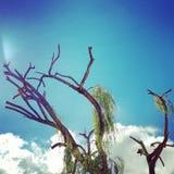 Einsamer Baum Stock Photos