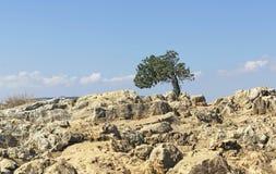 Einsamer Baum auf Berg Arbel lizenzfreies stockfoto