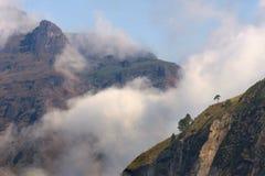 Einsamer Baum auf Bergabhang mit Morgennebel stockbilder