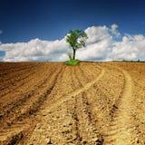 Einsamer Baum auf dem Feld Lizenzfreies Stockfoto