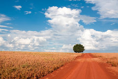 Einsamer Baum auf dem Feld unter Himmel Stockfoto