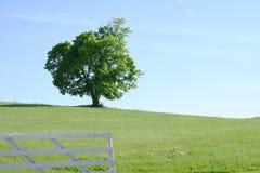 Einsamer Baum auf dem Gebiet Lizenzfreies Stockbild