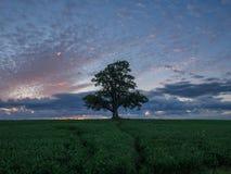Einsamer Baum auf dem Gebiet Lizenzfreie Stockbilder
