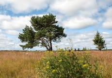 Einsamer Baum auf dem Gebiet Stockfotos