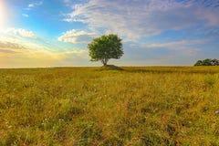 Einsamer Baum auf dem Gebiet Stockbilder