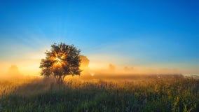 Einsamer Baum auf dem Gebiet mit Sonnenlicht Stockfoto