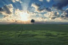 Einsamer Baum auf dem Gebiet mit Sonnenuntergang Stockfotos