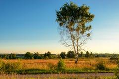 Einsamer Baum auf dem Gebiet unter dem blauen Himmel Stockfoto