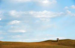 Einsamer Baum auf dem Gebiet unter Himmel und Wolken Stockbilder