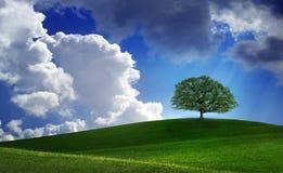 Einsamer Baum auf dem Grün archiviert Stockfotografie