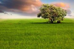 Einsamer Baum auf dem grünen Gebiet Stockfoto