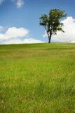 Einsamer Baum auf dem grünen Gebiet lizenzfreie stockfotografie