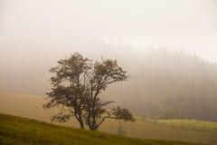 Einsamer Baum auf dem Hügel, über dem nebelhaften Tal in der böhmischen Schweiz Stockbild
