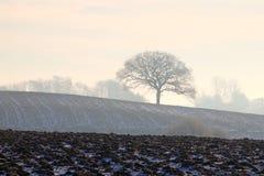 Einsamer Baum auf dem Hügel Stockfoto