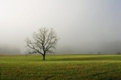 Einsamer Baum auf dem nebeligen Gebiet Lizenzfreie Stockfotografie