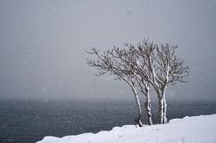 Einsamer Baum auf dem Schneeblizzard Lizenzfreie Stockfotografie