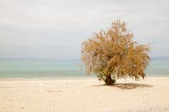 Einsamer Baum auf dem Strand, dem blauen Himmel und Meer Stockfotos