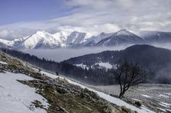 Einsamer Baum auf der Alpenwiese mit einem Hintergrund in den enormen Bergen mit Schnee Stockfoto