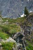 Einsamer Baum auf der Klippe in den Altai-Bergen, Russland Stockfoto
