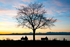 Einsamer Baum auf der Schachtküste stockfotos