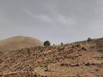 Einsamer Baum auf einem Atlas-Berg Stockfotografie