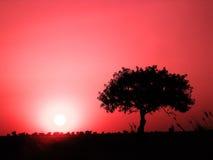 Einsamer Baum auf einem Feld Lizenzfreie Stockfotos