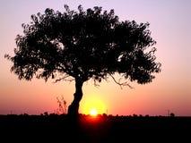Einsamer Baum auf einem Feld am Abend Stockbild