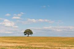 Einsamer Baum auf einem Gebiet Stockbild