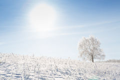 Einsamer Baum auf einem Gebiet auf sonnigem wolkenlosem Morgen Lizenzfreie Stockbilder