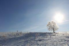 Einsamer Baum auf einem Gebiet auf sonnigem wolkenlosem Morgen Stockbilder