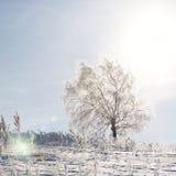 Einsamer Baum auf einem Gebiet auf sonnigem wolkenlosem Morgen Stockfotos