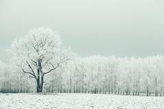 Einsamer Baum auf einem Gebiet bereift Stockfoto