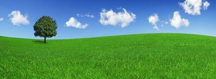 Einsamer Baum auf einem grünen Feld Stockfoto