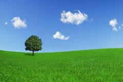 Einsamer Baum auf einem grünen Feld Lizenzfreie Stockbilder