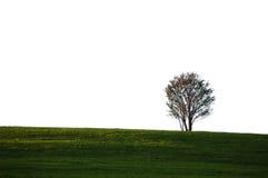 Einsamer Baum auf einem grasartigen Feld Stockfotografie