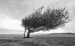 Einsamer Baum auf einem Hügel Lizenzfreie Stockbilder