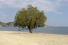 Einsamer Baum auf einem sandigen Strand Lizenzfreies Stockbild