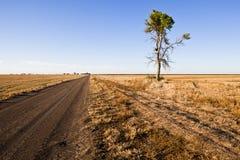 Einsamer Baum auf einem Schotterweg Lizenzfreies Stockfoto