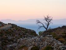 Einsamer Baum auf einem Tilos-Rand Stockbild