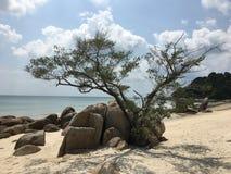 Einsamer Baum auf einem weißen Sandstrand zwischen Felsen Stockfotos