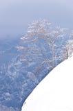 Einsamer Baum auf einer schneebedeckten Klippe Lizenzfreies Stockbild