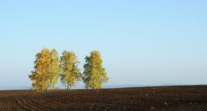Einsamer Baum auf Feld mit gemähtem Gras Lizenzfreie Stockfotografie