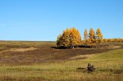 Einsamer Baum auf Feld mit gemähtem Gras Stockfotos