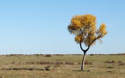 Einsamer Baum auf Feld mit gemähtem Gras Stockfotografie